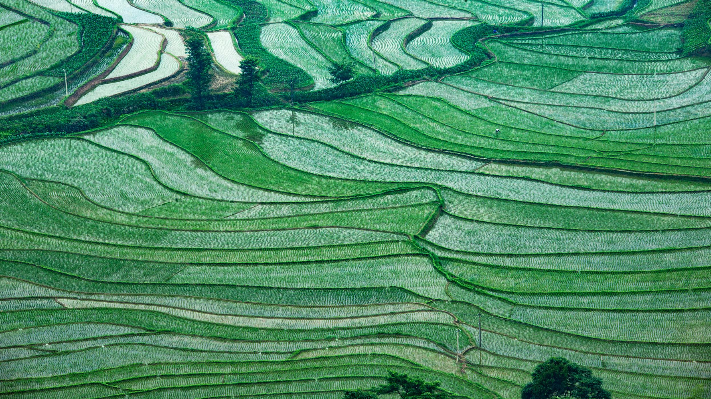 作品名称:  春天的线条  作者名称:肖华林 作品简介:摄于湖北省利川